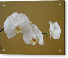 White Orchid's Acrylic Print by Cindy Croal