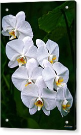 Acrylic Print featuring the photograph White Orchids by Aloha Art