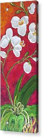 White Orchids On Red Acrylic Print by Paris Wyatt Llanso