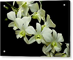 White Orchids Acrylic Print by Swank Photography