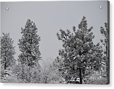 White Out Acrylic Print by Greg Patzer