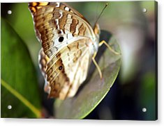 Acrylic Print featuring the photograph White Peacock Butterfly by Greg Allore