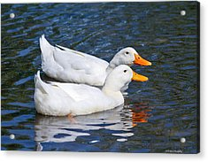White Pekin Ducks #2 Acrylic Print by Ann Murphy