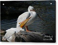 White Pelicans Acrylic Print by E B Schmidt