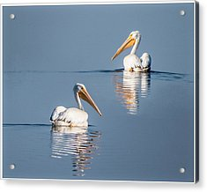 Acrylic Print featuring the photograph White Pelicans by Patti Deters
