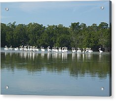 Acrylic Print featuring the photograph White Pelicans by Robert Nickologianis