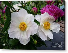 Acrylic Print featuring the photograph White Peony Flower by Rose Wang