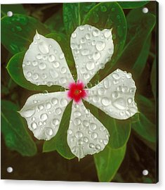 Acrylic Print featuring the photograph White Periwinkle by Mark Greenberg
