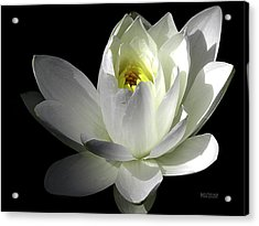 White Petals Aquatic Bloom Acrylic Print