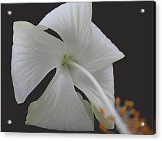 White Petals Acrylic Print by Rohit Jadav