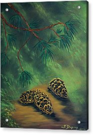 White Pine  And Cones Acrylic Print