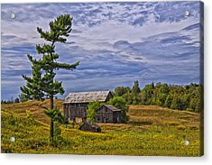 White Pine And Old Barn Acrylic Print