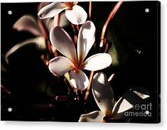 White Plumeria Acrylic Print
