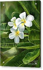 White Plumeria Flowers Acrylic Print by Sharon Freeman