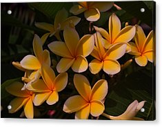 Acrylic Print featuring the photograph White Plumeria by Miguel Winterpacht