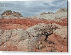 White Pocket Acrylic Print by Darryl Wilkinson