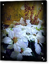 Acrylic Print featuring the photograph White Poinsettia by Michelle Frizzell-Thompson