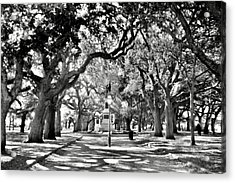 White Point Gardens At Battery Park Charleston Sc Black And White Acrylic Print