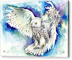 White Polar Owl - Wizard Dynamic White Owl Acrylic Print