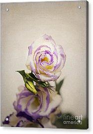 White Purple Lisianthus Acrylic Print