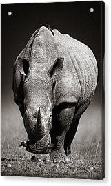White Rhinoceros  In Due-tone Acrylic Print