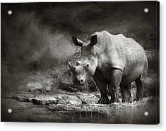 White Rhinoceros Acrylic Print