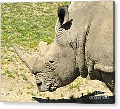 White Rhinoceros Portrait Acrylic Print by CML Brown