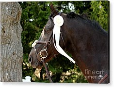 White Ribbon Acrylic Print