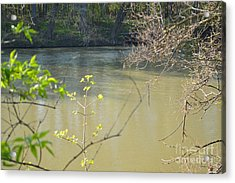 White River Acrylic Print by Alys Caviness-Gober