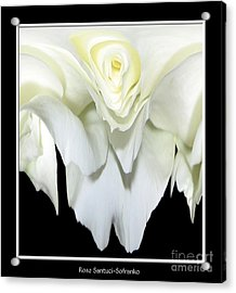 White Rose Abstract Acrylic Print by Rose Santuci-Sofranko