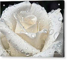 White Rose After The Rain Acrylic Print