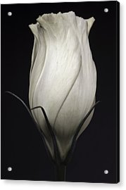Black And White Rose Flower Art Work Photography Acrylic Print