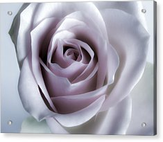 White Roses Flowers Art Work Photography Acrylic Print