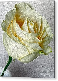 Acrylic Print featuring the photograph White Rose In Oil Effect by Nina Silver
