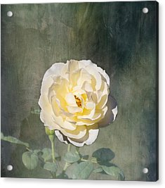 White Rose Acrylic Print by Kim Hojnacki