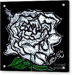 White Rose Acrylic Print by Neil Stuart Coffey