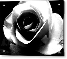 White Rose Acrylic Print by Nina Ficur Feenan