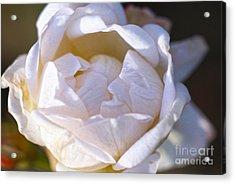 White Rose Acrylic Print by Nur Roy