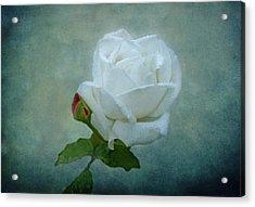 White Rose On Blue Acrylic Print by Sandy Keeton