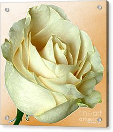 Acrylic Print featuring the photograph White Rose On Sepia by Nina Silver