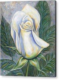 White Rose One Acrylic Print