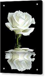 White Rose Reflection Acrylic Print