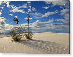 White Sands Afternoon 2 Acrylic Print