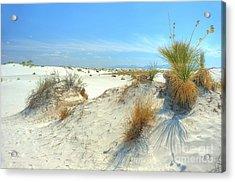 White Sands Foliage Acrylic Print by John Kelly