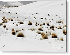 White Sands Life Acrylic Print
