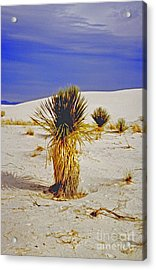 White Sands National Monument Cactus Acrylic Print by ImagesAsArt Photos And Graphics