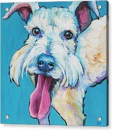 White Schnauzer Goes Gonzo Acrylic Print by Janet Burt