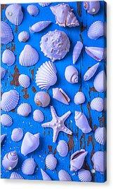 White Sea Shells On Blue Board Acrylic Print by Garry Gay