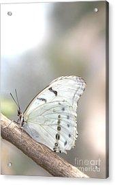 White Serenity Acrylic Print
