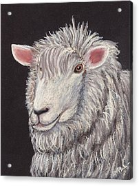 White Sheep Acrylic Print by Anastasiya Malakhova